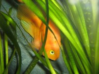 Gold Fish, 16 ноября , Санкт-Петербург, id6607024